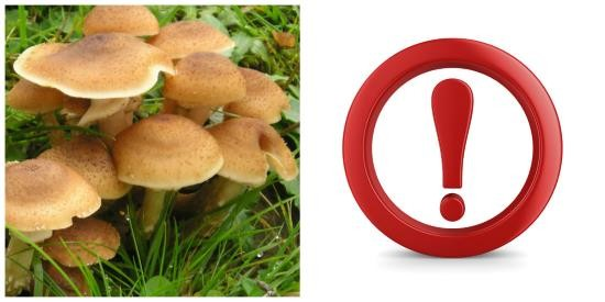 Опасность пищевого отравления грибами