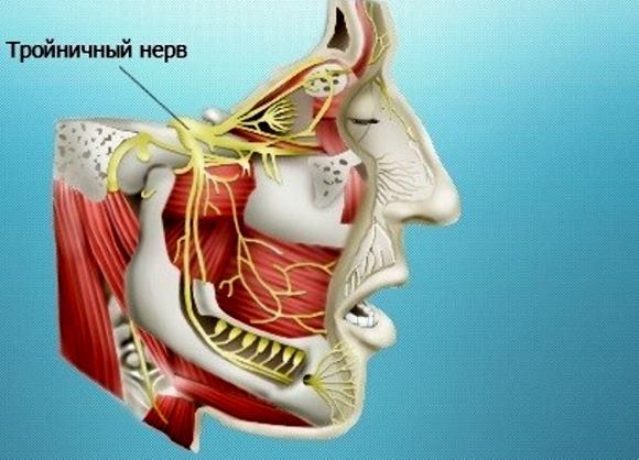Тройничный нерв имеет три ветви