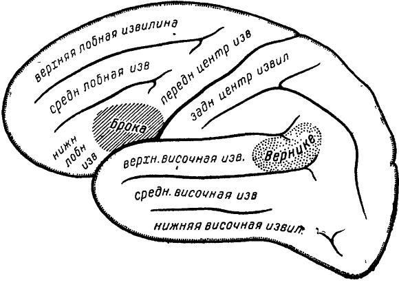 Существуют определенные зоны мозга, обрабатывающие речевую информацию