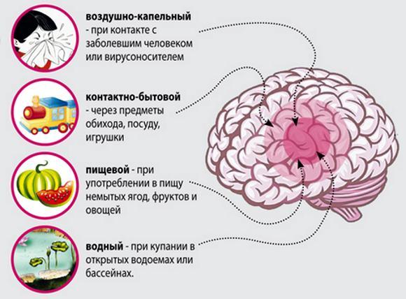 Микроорганизмы, вызывающие менингит, могут проникать в организм различными путями