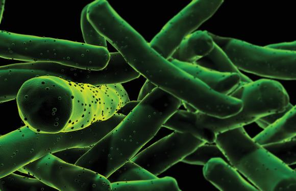 Микобактерия туберкулеза (МБТ)