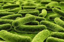 Туберкулезная форма менингита: клиническая картина, этапы развития, лечебный процесс, профилактические меры