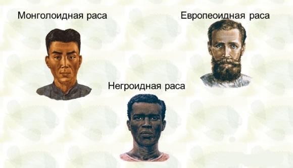 Основные расы людей