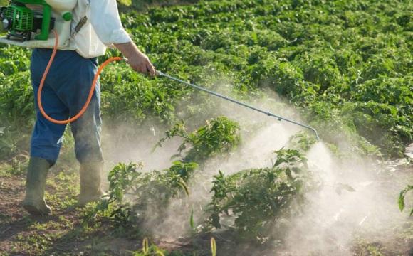 Пестициды повышают риск возникновения БП