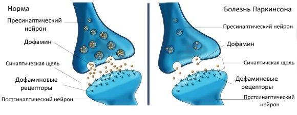Дофамин обеспечивает бессознательный контроль за движениями