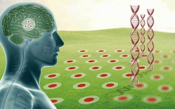 Мутации в определенных генах ведут к аутосомно-доминантной болезни Альцгеймера