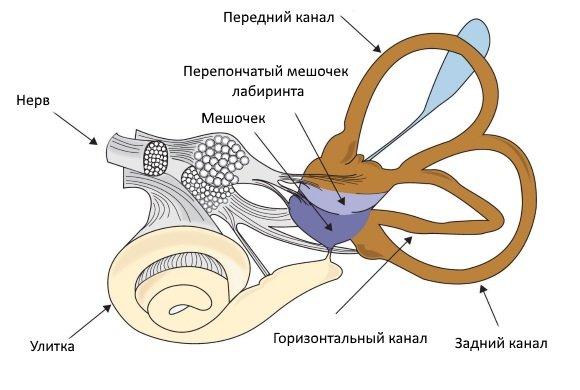 Система из трех полукружных каналов