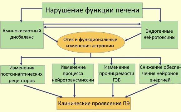 Схема патогенеза печеночной энцефалопатии